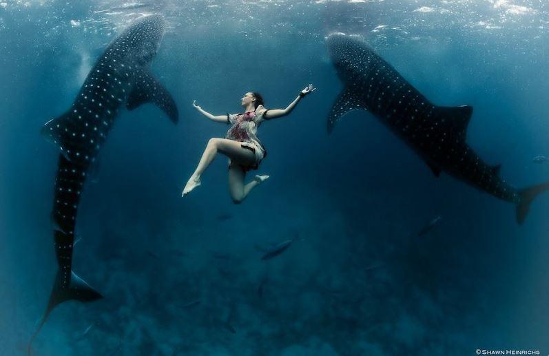 twin_whale_shark