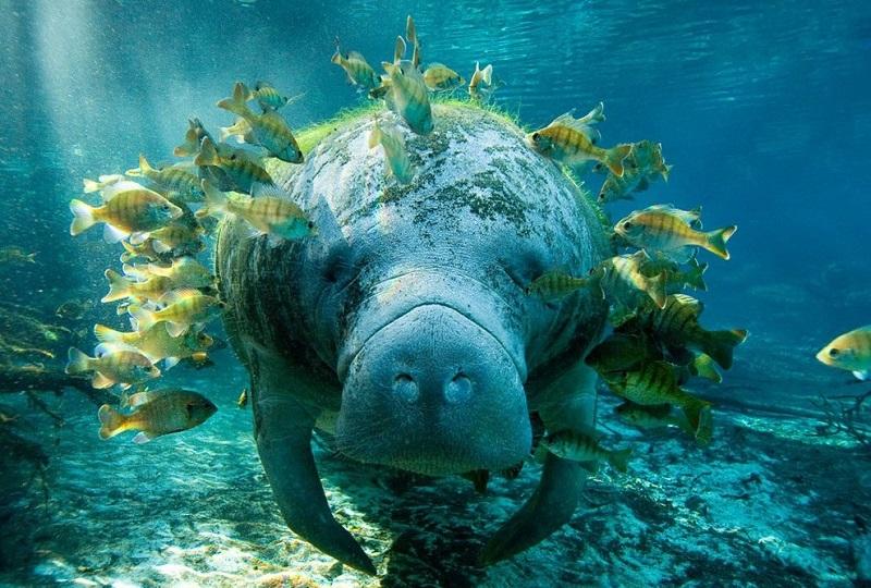 underwater_photos_animals