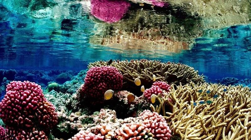 underwater_photos_great_barrier_reef