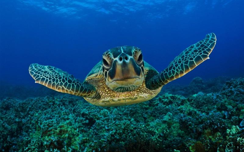 underwater_photos_sea_turtle