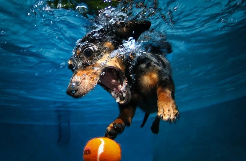 underwater_photos_seth_casteel_underwater_dog
