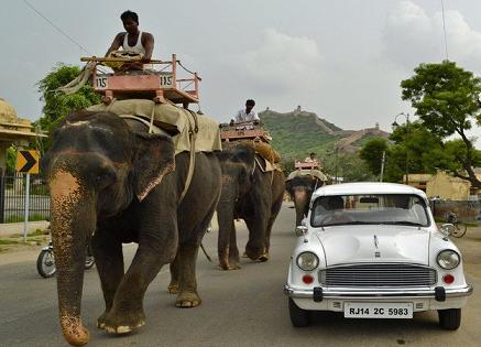 Ambassador with elephants