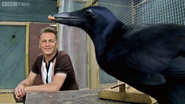 animal intelligence, birdlife, Birds, Conservation, Crows, Good Nature, Natural Habitat Adventures, Nature, recent, Wildlife, Chris Packham, crow the problem solver, intelligent birds