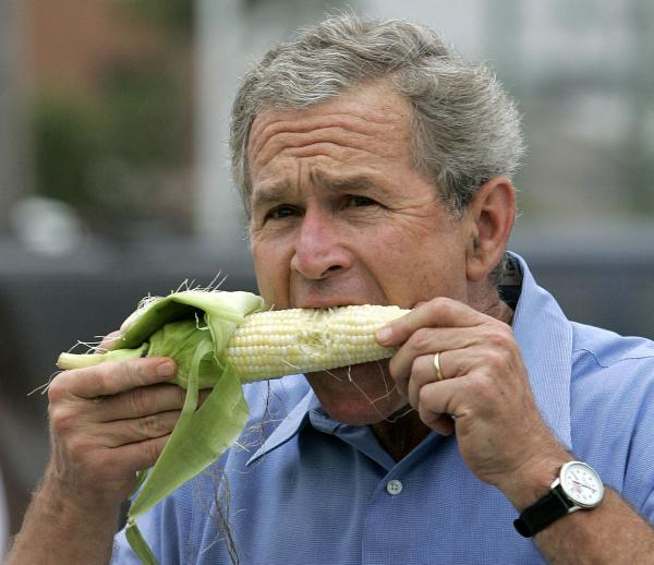 George W. Bush, pol stuffing, united states politicians, crazy photos, gut busting