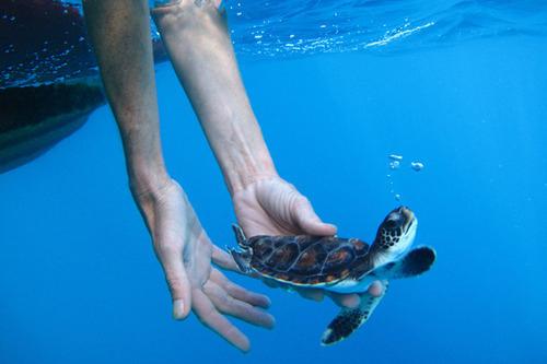turtles selfie, animal photograph, photo with sea turtles, funny turtles images, funny outdoor images, fun with animals, animal clicks, happy turtles, happy animals, turtles world, photogenic turtles, turtles loves camera, cute turtles photos, sea turtles