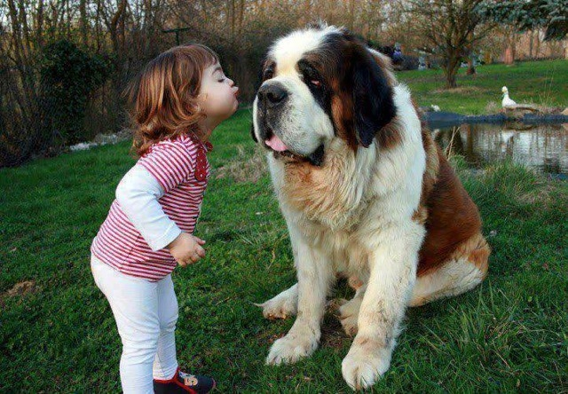 baby pics, babies, cute babies, babies friends, baby with puppy, baby with dog, baby companion, cute babies