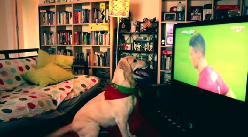 How Labrador Dog Celebrates Goal Fifa World Cup 2014 Reckon Talk