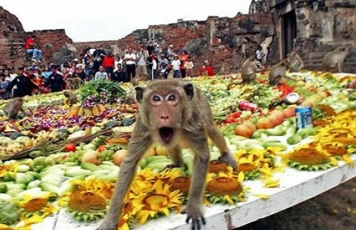 Thailand_Monkey_Buffet