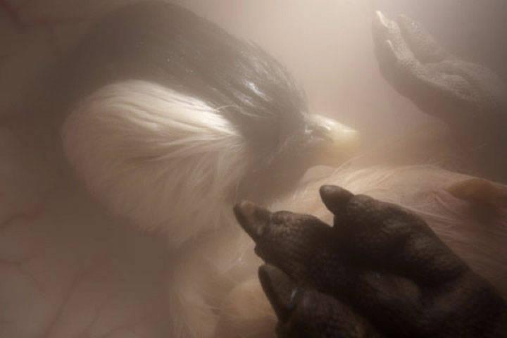 Penguin in Womb