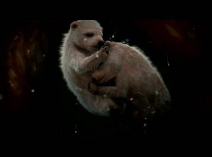 Polar Bears in Womb