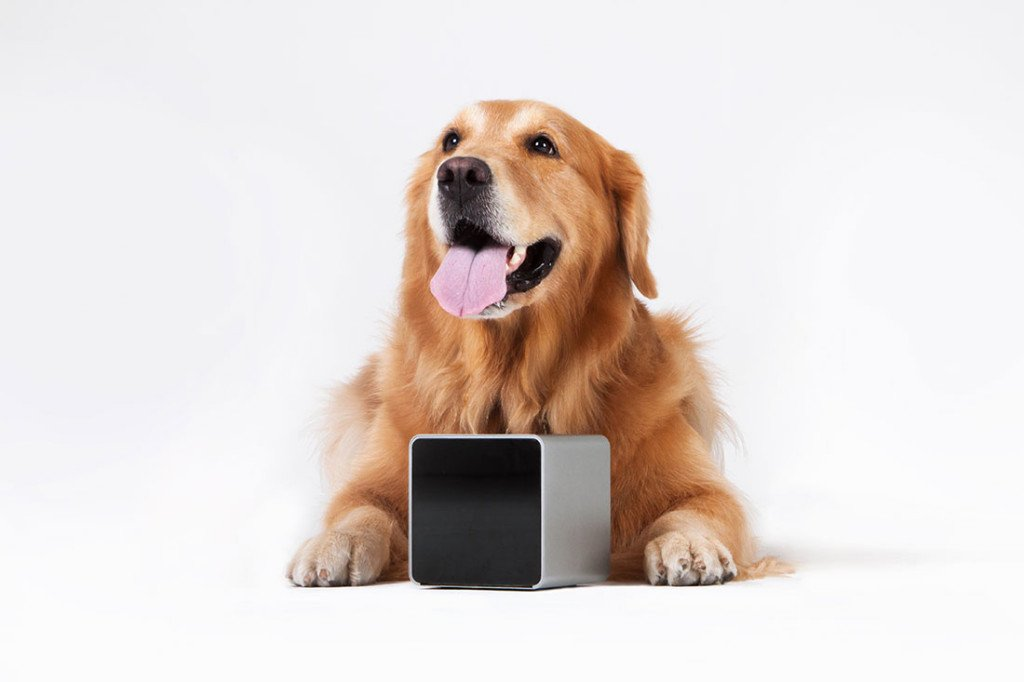 petcube, helps people to monitor and play with their pets,Kickstarter-backed Petcube,San Francisco Bay AreaCo-founder Alex Neskin,Yaroslav Azhnyuk and Andrey Klen,Celebrity pets of the internet,a golden retriever with 182,000 followers on Vine