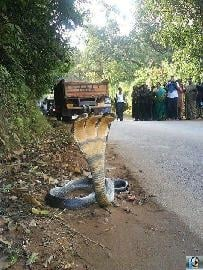three headed snake