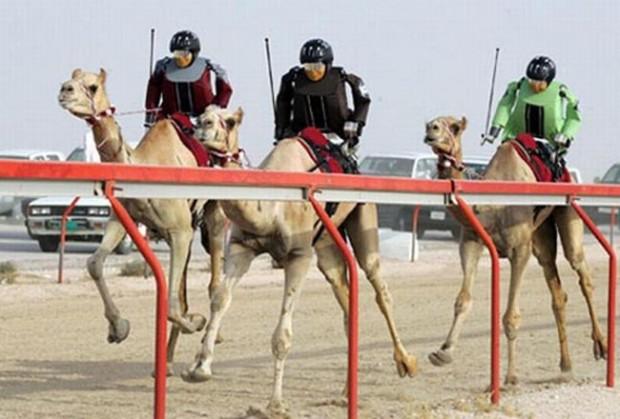 12. Robot jockeys race camels in Dubai.