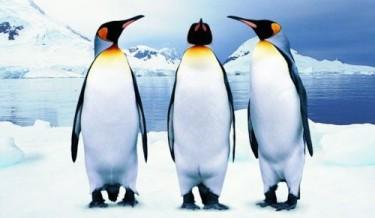 animals, cute animals, cute penguins, penguins facts, amazing penguins facts, omg facts, wtf facts, lol, animals facts, antarctica, penguins secrets, penguins life, how penguins live, how penguins eats,