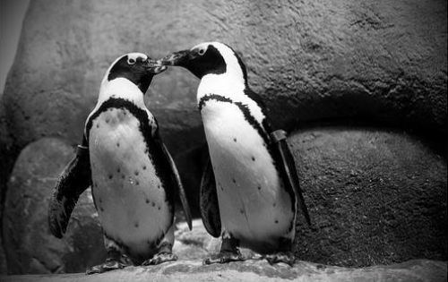 animals, cute animals, cute penguins, penguins facts, amazing penguins facts, omg facts, wtf facts, lol, animals facts, antarctica, penguins secrets, penguins life, how penguins live, how penguins eats,