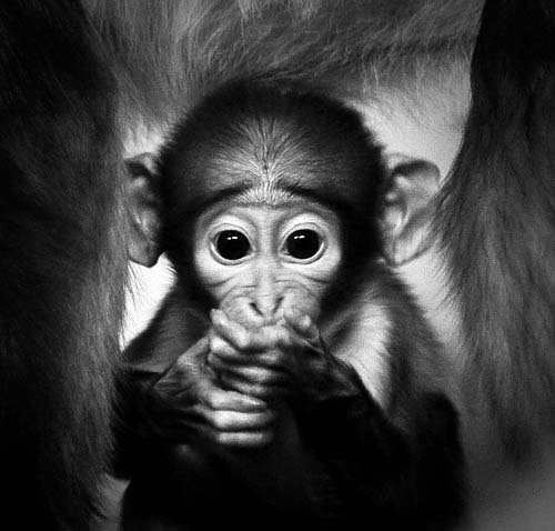 adorable, animals, babies, baby, collections, cute, funny, furrytalk, humor, life, mammels, monkey, monkeys, photography, pictures, playing, sweet, wild, wildlife, cute baby monkeys, lol, wtf, omg, cute animal baby, adorable baby monkeys
