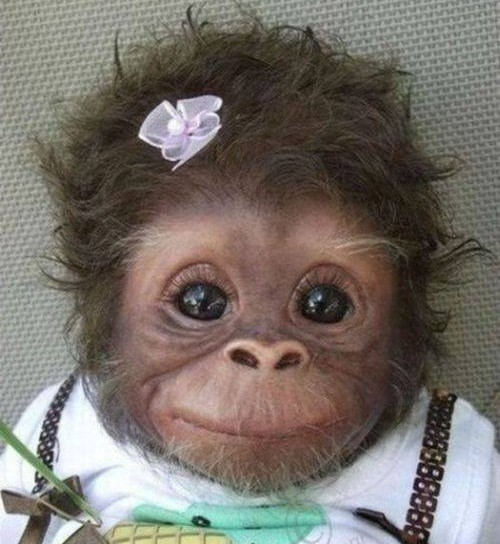 18 Most Innocent And Cute Baby Monkeys 12 Steal My Heart Reckon Talk