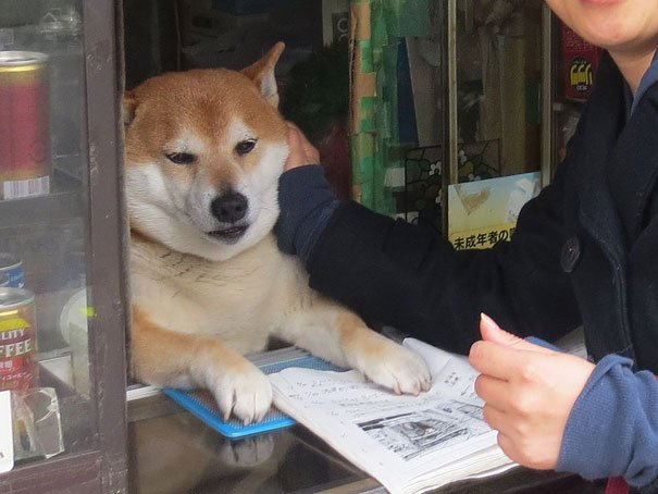 Dog-Runs-Small-Cigarette-Shop-In-Japan-S