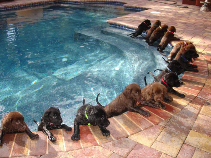 Awesome Dog Pool Party Viral Video Reckon Talk