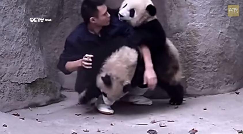 cute-baby pandas are adorale