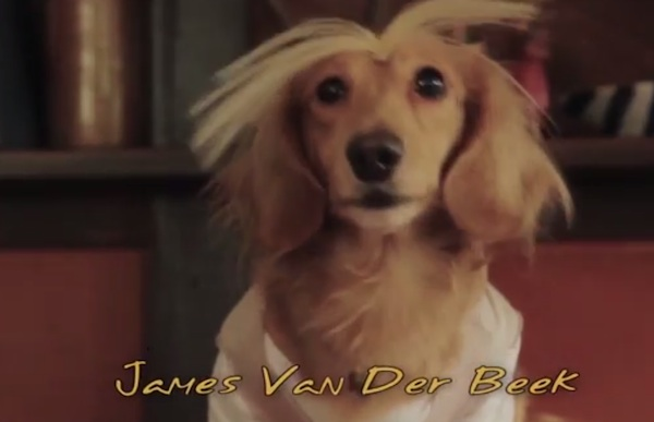 Animals, Cute, dachshund, Dog, parody, pet, Pets, Spoof