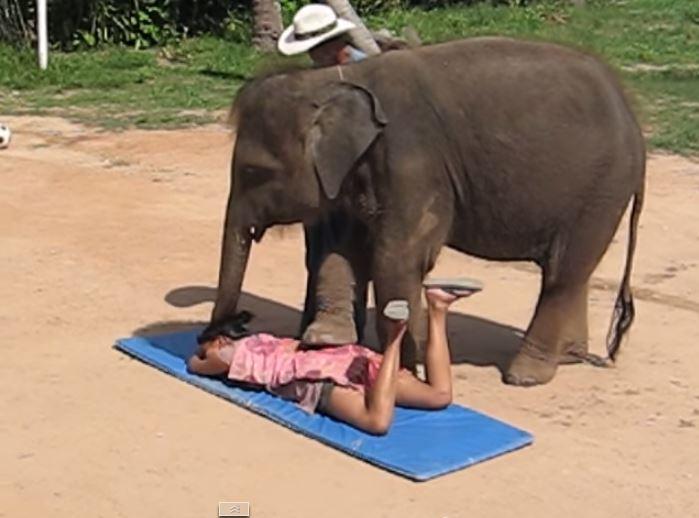 elephant-massage-2