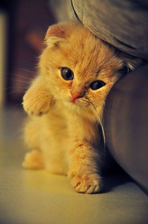cute, animal, kittens, photos, amazing cat, cat child, cat baby, scottish fold kitten, black kitty, white kitty