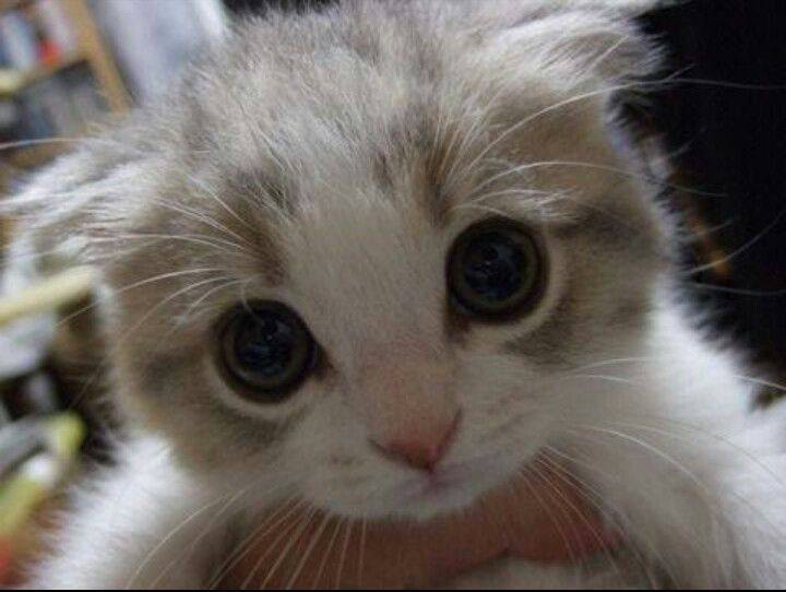 17 Cutest Kittens Ever Photographed In The World