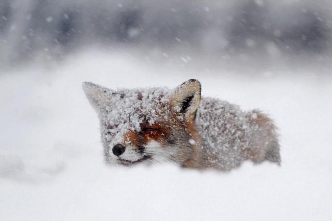 fox 7