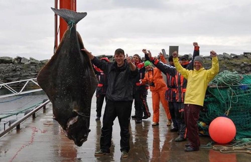 atlantic halibut, world record fish, germany, german fisherman, norwegian waters, biggest fish