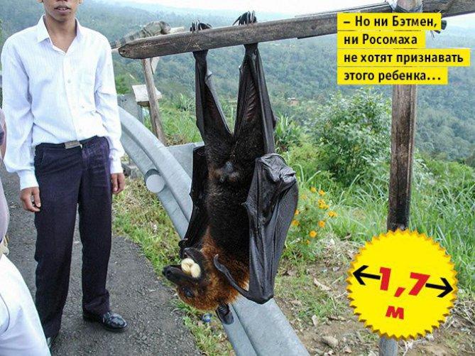 biggest bat