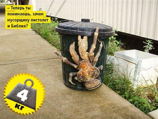 biggest crab
