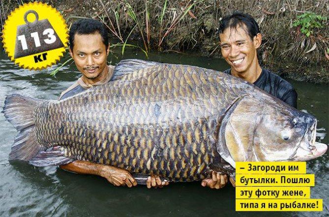 biggest carp