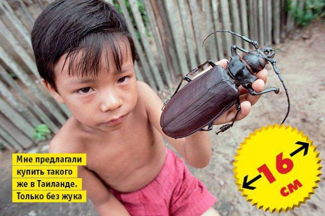 biggest beetle