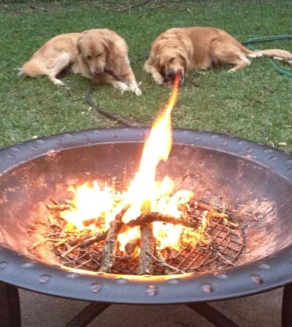 perfect-timing-dog-fire