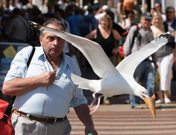 perfectly-timed-photos-seagull