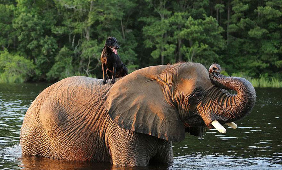 inspiration, bubbles and bella, puppy and elephant, best friends, dog and elephant, animal friendships, cute