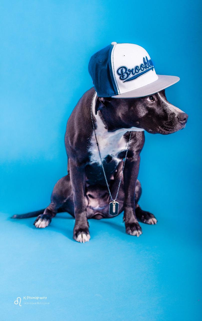 cute dog_1
