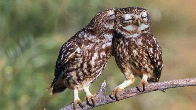 Cute Owl Photos 1