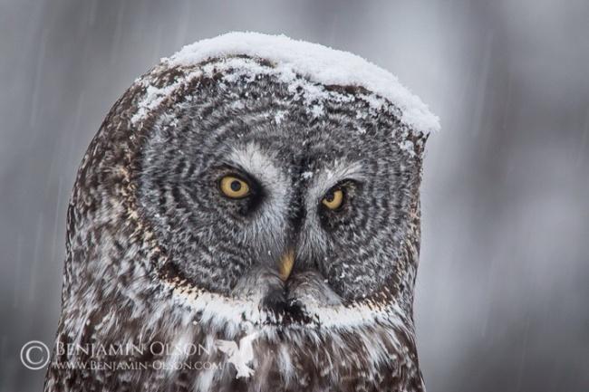 Cute Owl Photos 10