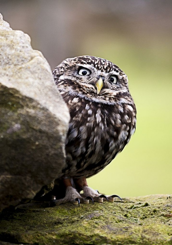 Cute Owl Photos 11