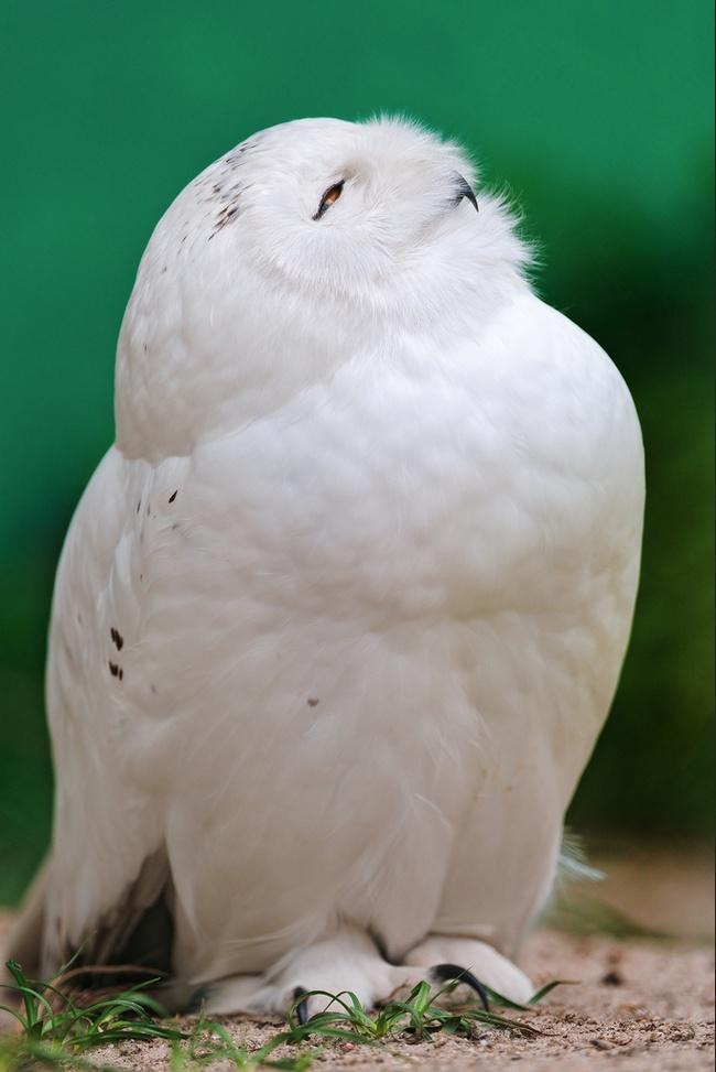 Cute Owl Photos 12