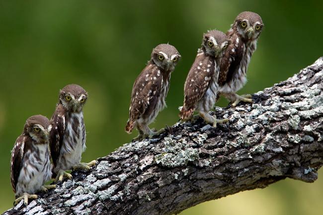 Cute Owl Photos 13