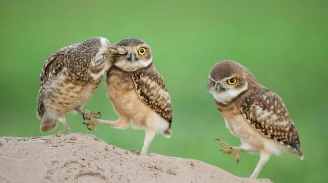Cute Owl Photos 14