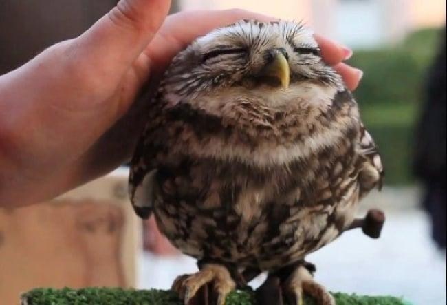 Cute Owl Photos 15