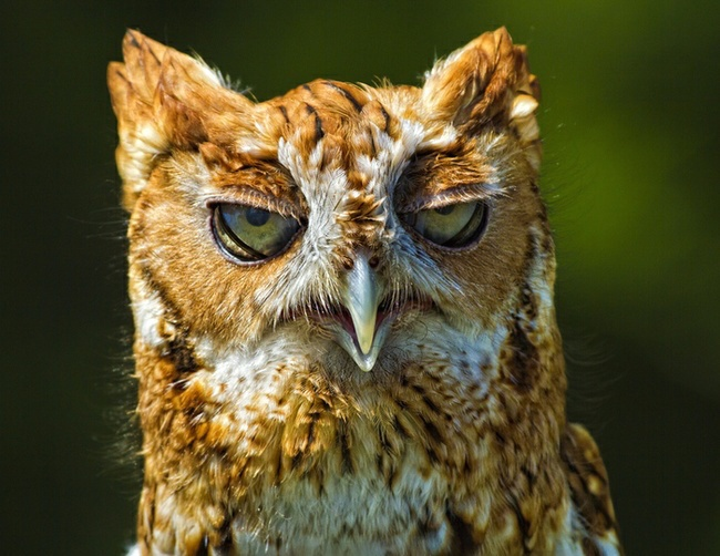Cute Owl Photos 16