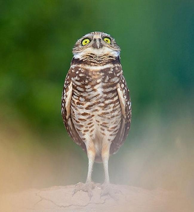 Cute Owl Photos 17