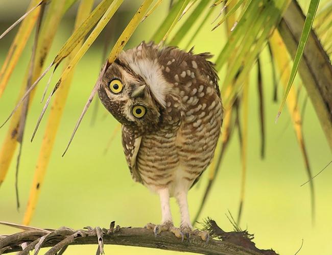 Cute Owl Photos 2