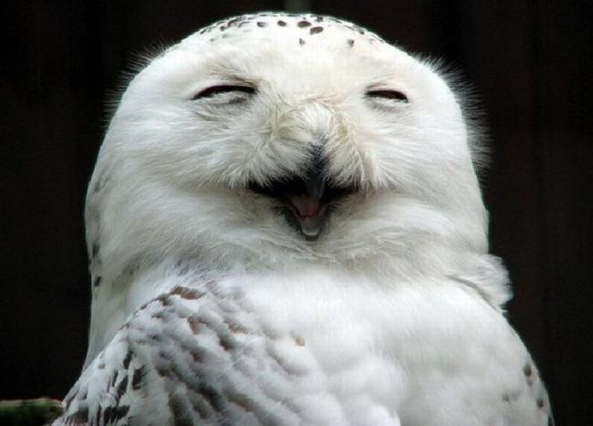 Cute Owl Photos 3
