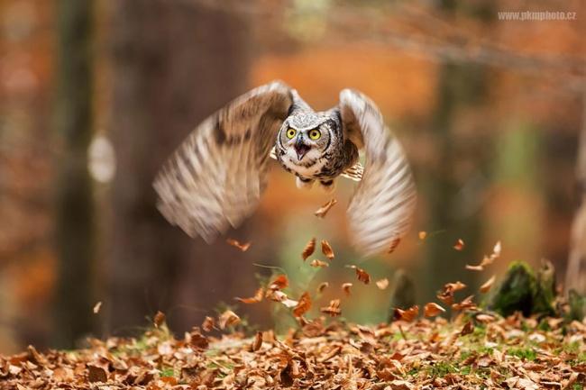 Cute Owl Photos 4